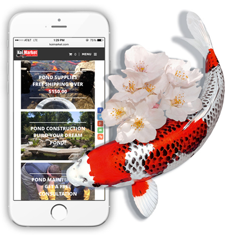 Koi fish, Flowers, and a iPone